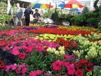 无锡朝阳花卉市场