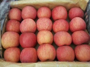 2015年陕西红富士苹果价格